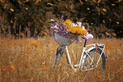 bicycle-3522238_1920
